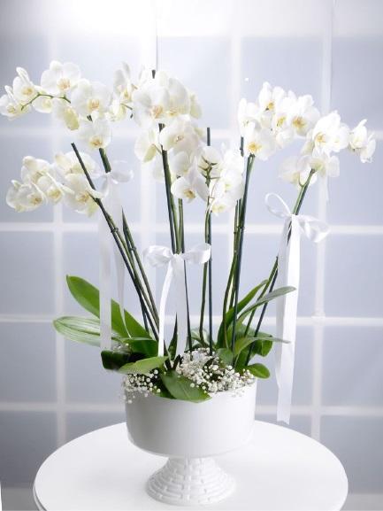 8 Dallı Beyaz Orkide