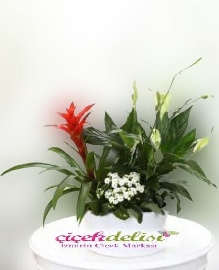 Anneye Özel Çiçek bahçesi