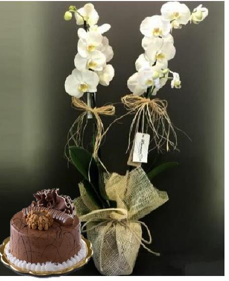 4 Kişilik pasta ve çiftdal orkide