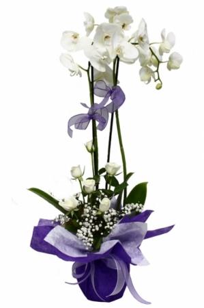 2 Dallı  beyaz orkide ve beyaz çiçekler